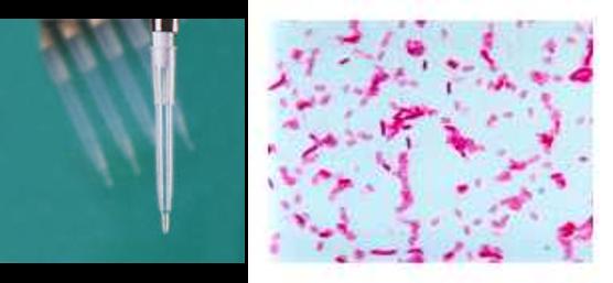 Endotoxines